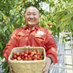 規格外の旬の果物、注文殺到 定額で40キロ、山形の果樹園